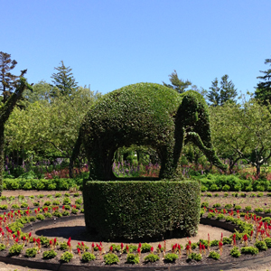Green Animal Topiary Garden